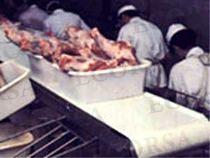 cintas-transportadoras-industria-alimentaria-11685-2657281